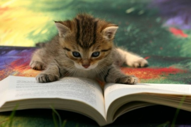 kitty-reading-a-book