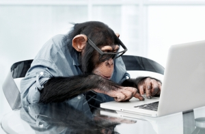 monkey-productivity