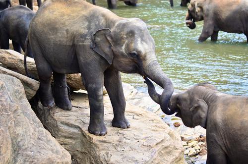 elephants-being-social